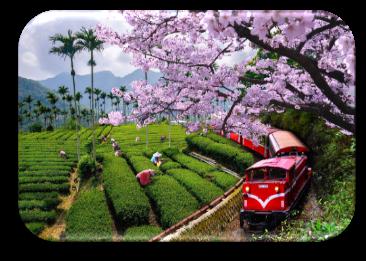TAIWAN - ĐÀI BẮC - ĐÀI TRUNG - GIA NGHĨA - A LÝ SƠN 5N5Đ